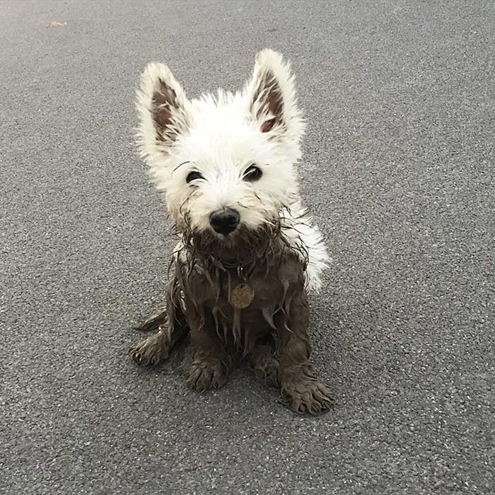 18. Всегда найдет грязь  грязь, животные, фото