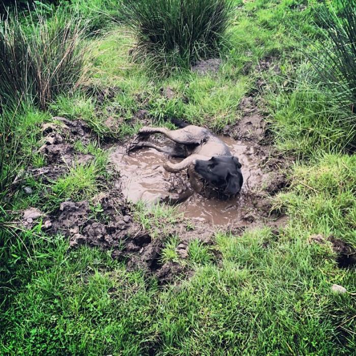 36. Решил освежиться  грязь, животные, фото