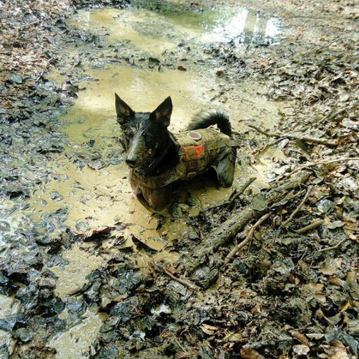 40. Лучшее место для отдыха  грязь, животные, фото