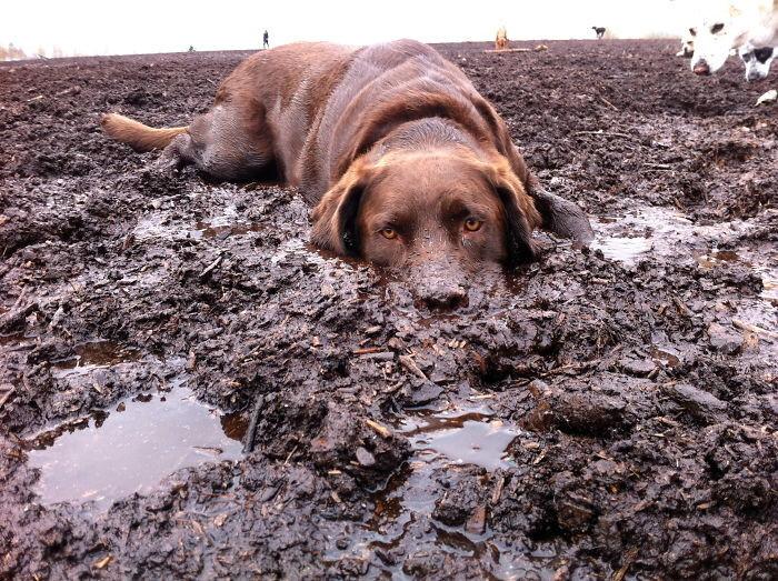 16. Отдых  грязь, животные, фото