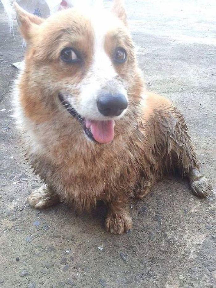 31. Какая еще грязь? грязь, животные, фото