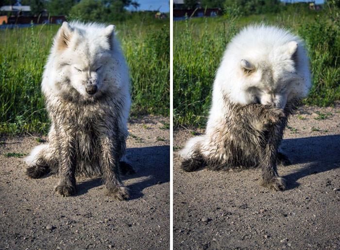 23. Немножко стыдно  грязь, животные, фото