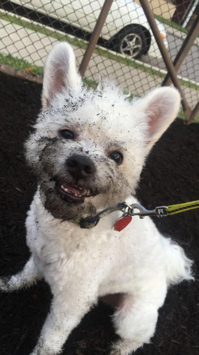 28. Счастливая улыбка  грязь, животные, фото