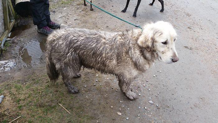45. Белизна исчезла  грязь, животные, фото