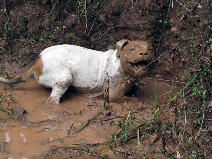 12. Лучший день  грязь, животные, фото
