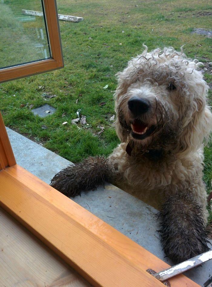 38. Соседский пес пришел поздороваться  грязь, животные, фото