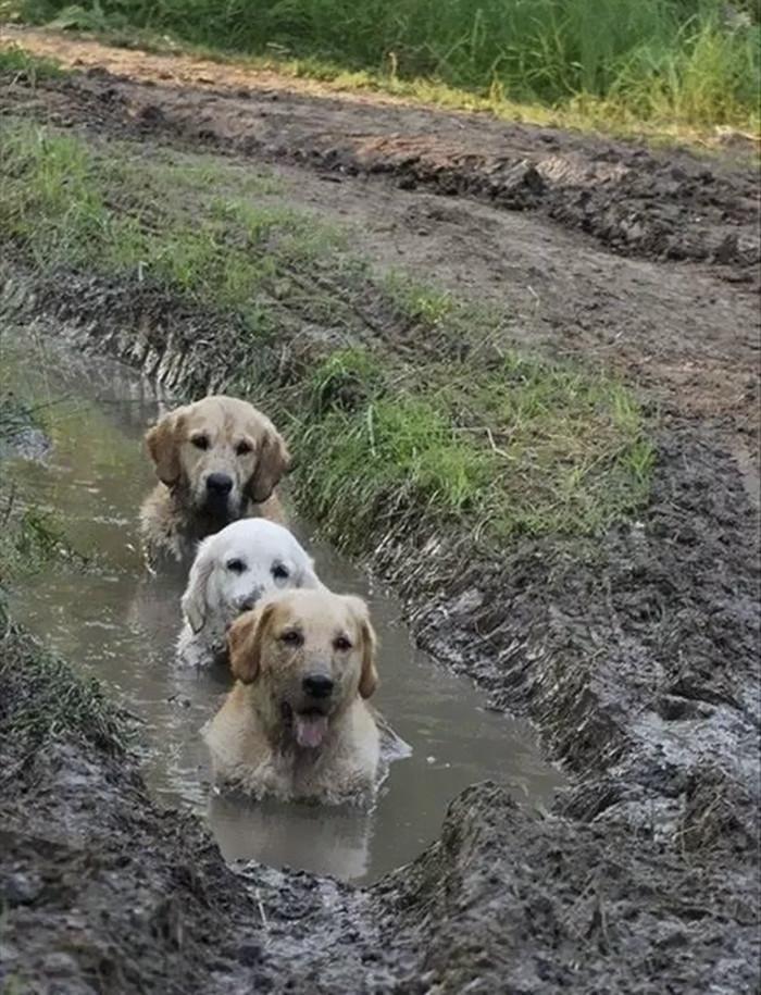 15. Трио в грязи  грязь, животные, фото