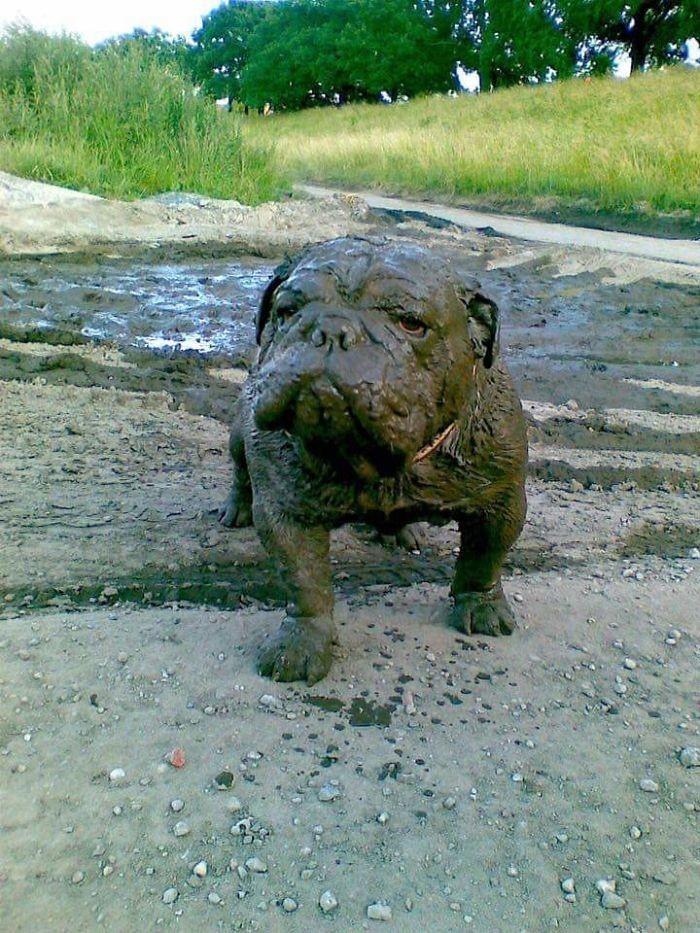 4. Грязевая маска на все тело  грязь, животные, фото