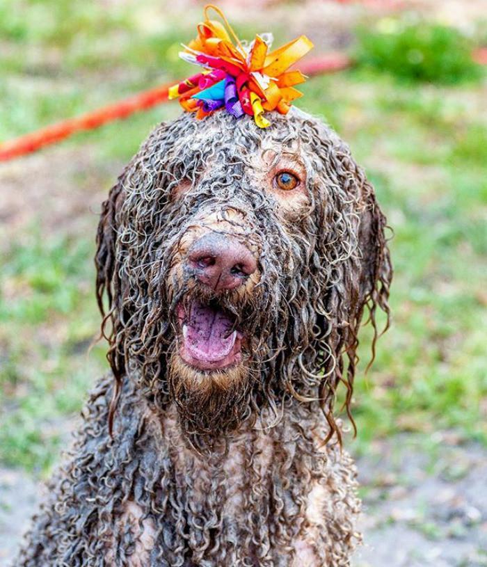 21. Чумазое очарование  грязь, животные, фото