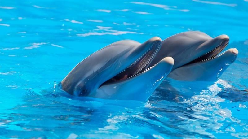 5. Дельфин животные, природа, факты