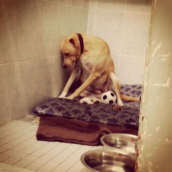 «Самая грустная собака в мире» снова ищет дом животные, одиночество, собака, спасение