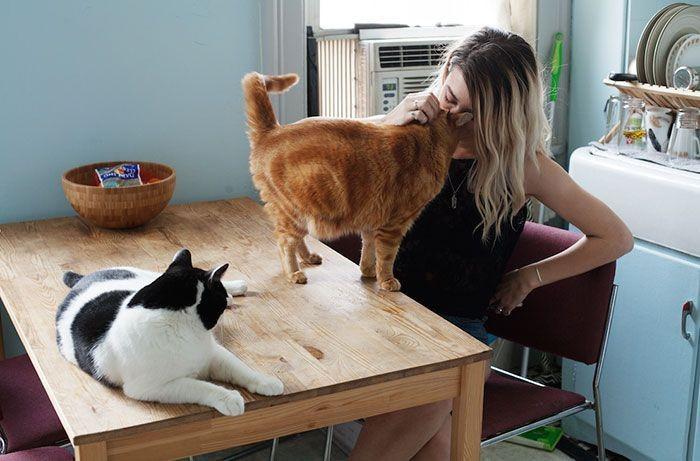 Стефани с Саймоном и Оливером девушки, животные, коты, фотопроект