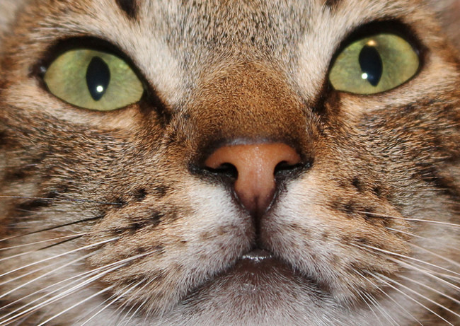 14 невероятных секретов, которые скрывают кошки от своих хозяев животные, коты, секрет