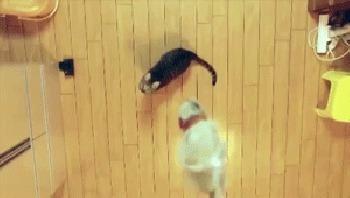 животные, коты, секрет