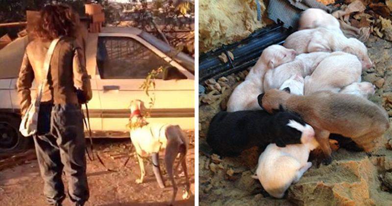 Собака со сломанными лапами привела ветеринара к своим щенкам животные, собаки, спасение, счастливый конец, щенки