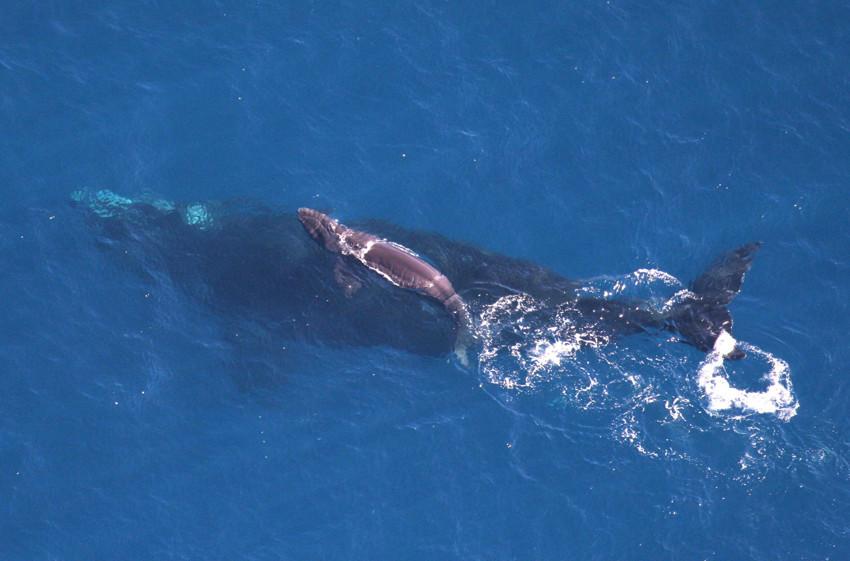 27. Детеныш кита  детеныш, животные