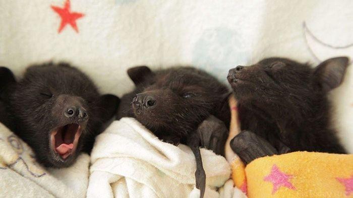 12. Новорождённые летучие мыши детеныш, животные