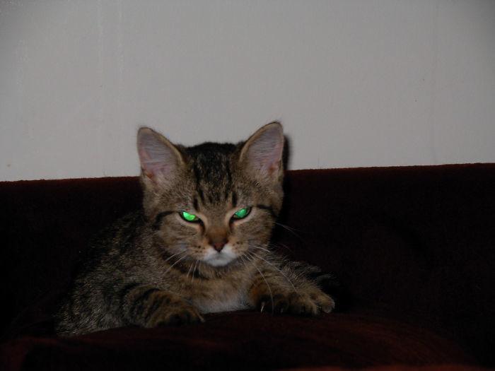Очаровательные, пушистые комочки зла зло, злые, котята, фото, юмор