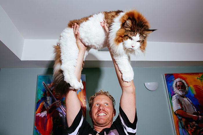 Красавец Самсон – такого кота вы ещё не видели! большой котик, животные, кот