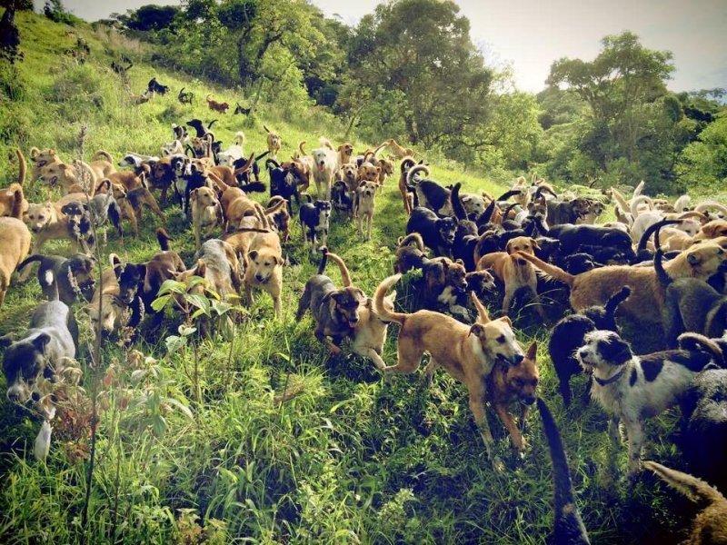 Эта семейная пара спасла 1000 собак, которых хозяева отдали на усыпление  животные, собаки, спасение