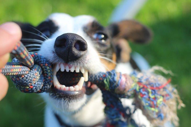 Каким видом спорта можно заняться со своей собакой? животные, полезные советы, собаки, советы