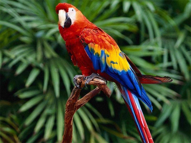 10 опасных животных, которых все считают милыми и добрыми животные, животные фото, интересные факты, опасные животные