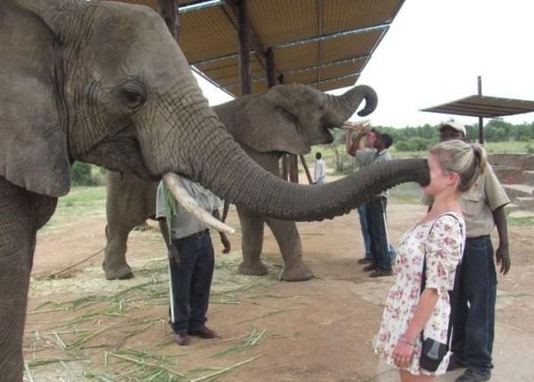 Животные против женщин женщины, животные, прикол, фотографии