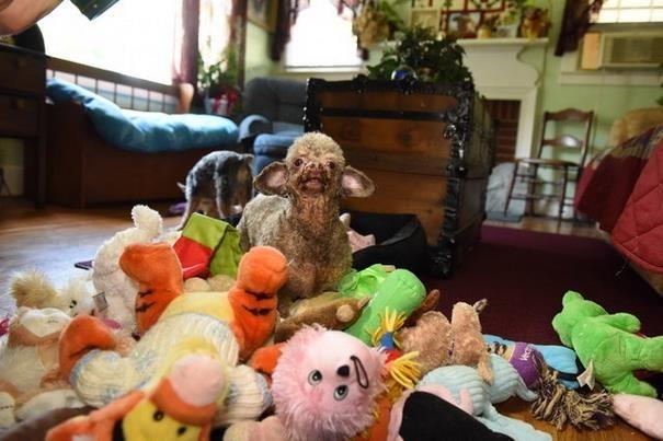 Собака всю жизнь просидела в подвале и теперь не нарадуется жизни животные, собака