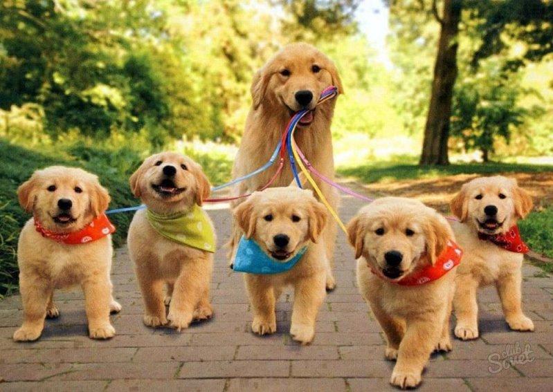 10 фактов о вашей собаке, которые вас удивят  животные, интересное, собаки