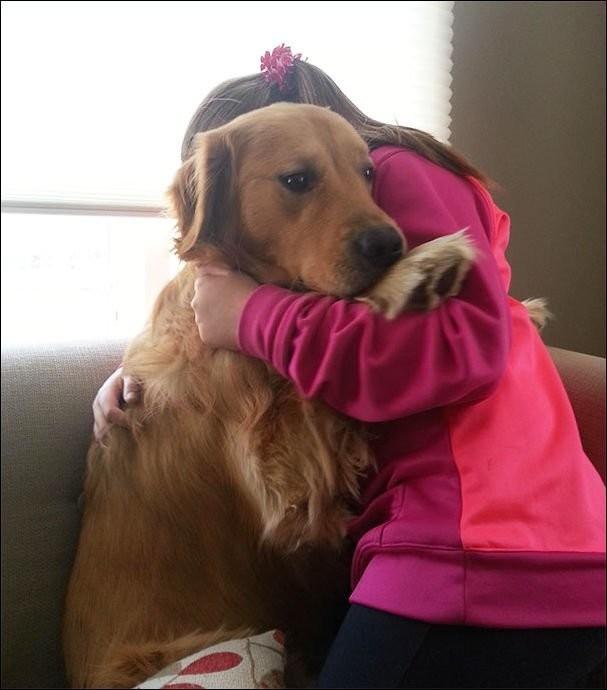 Собаки испугаки животные, прикол, собаки, фото
