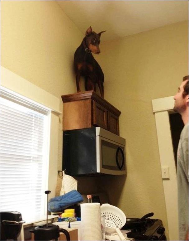 Увидел мышь животные, прикол, собаки, фото