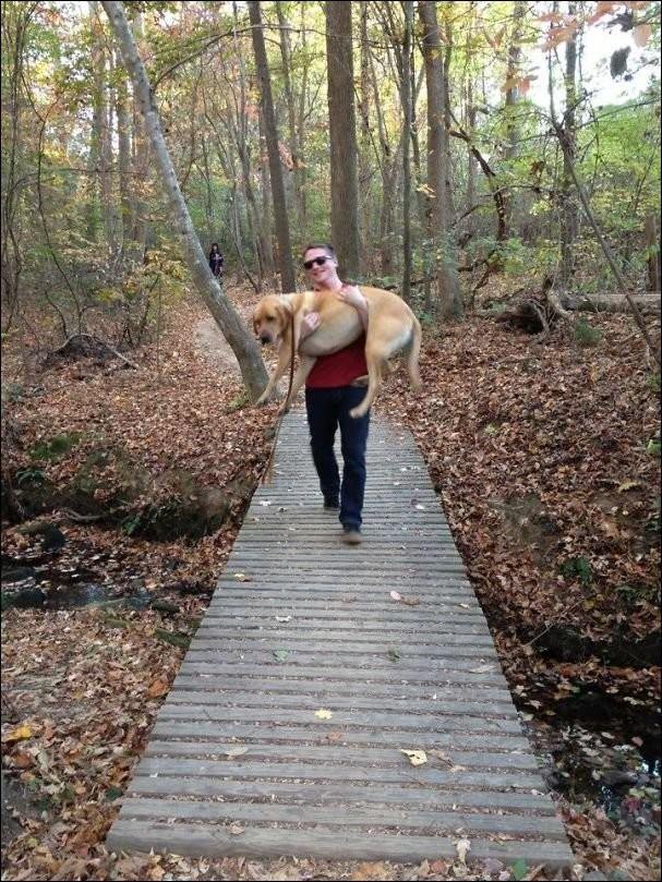 Страшно ходить по мосту животные, прикол, собаки, фото