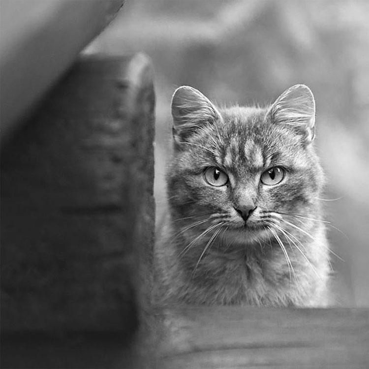 Эмоциональные портреты животных фотографа Сергея Полюшко животные, портреты животных, фото животных, фотография