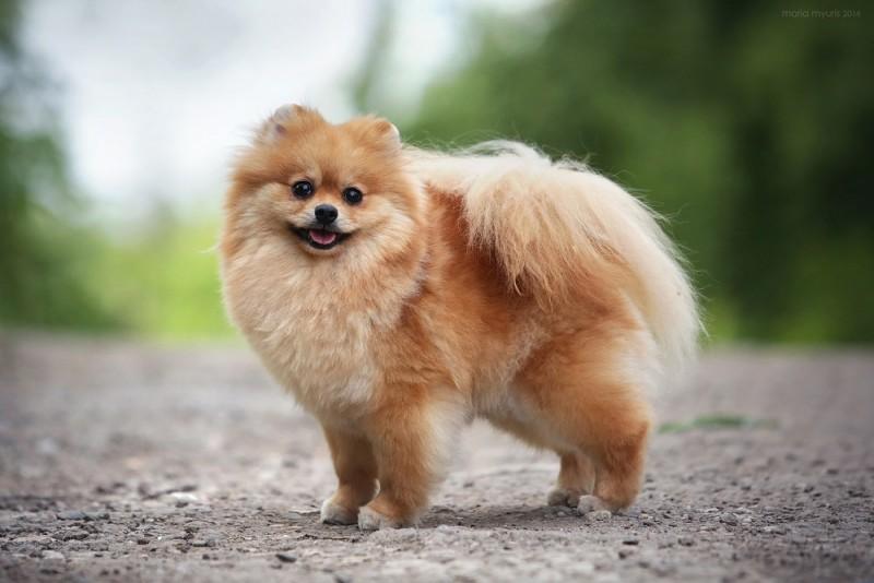 Декоративные собаки фото и названия