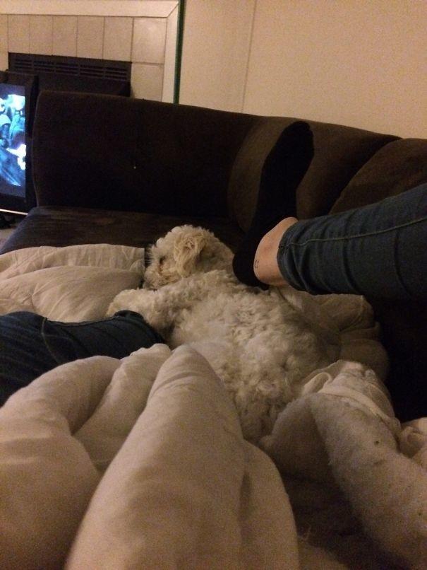 Ноги хозяина - лучшая постель! животные, забавно, зверские шутки, смешно, собаки, ты не поверишь, фото, эти забавные животные