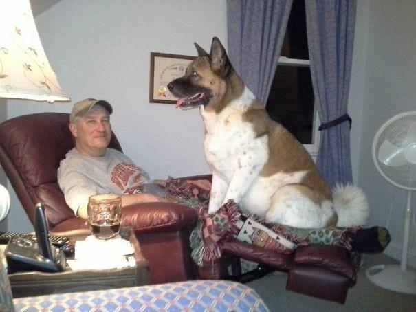 Человек, зачем тебе телевизор? Я же интереснее! животные, забавно, зверские шутки, смешно, собаки, ты не поверишь, фото, эти забавные животные