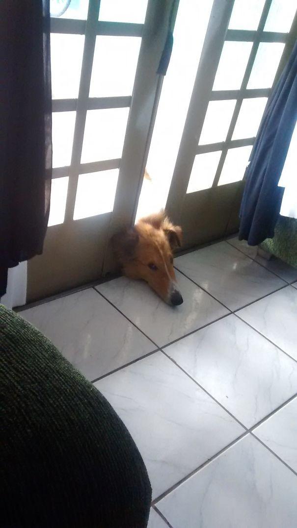 Что смотришь? Отдыхаю я тут! животные, забавно, зверские шутки, смешно, собаки, ты не поверишь, фото, эти забавные животные