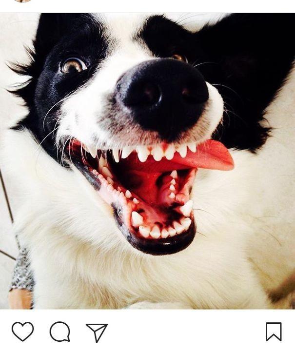 Дурашка животные, забавно, зверские шутки, смешно, собаки, ты не поверишь, фото, эти забавные животные