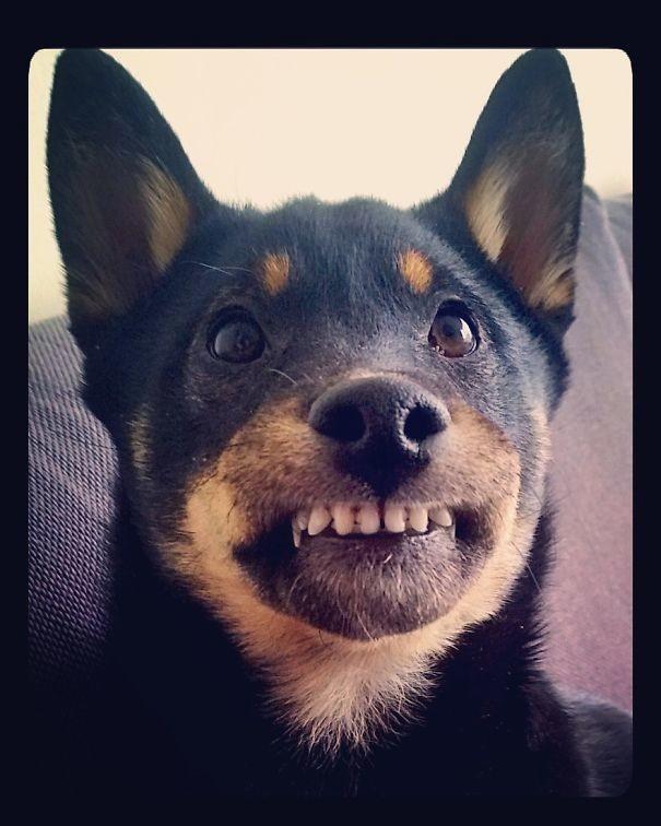 Улыбочку! животные, забавно, зверские шутки, смешно, собаки, ты не поверишь, фото, эти забавные животные