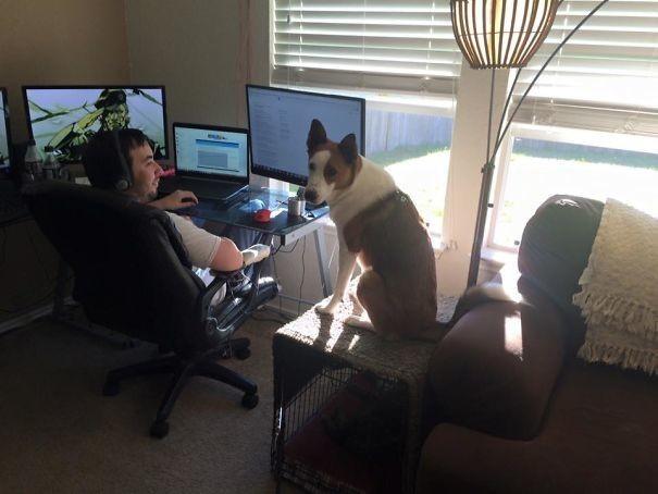 Я хочу работать, как ты! животные, забавно, зверские шутки, смешно, собаки, ты не поверишь, фото, эти забавные животные