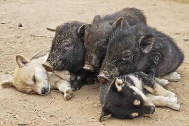 Эти малыши готовы дрыхнуть в любое время и в любом месте фото, щенки