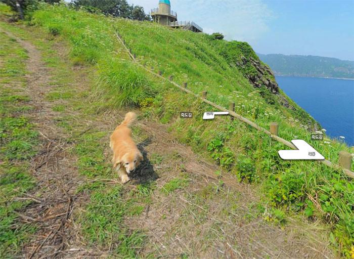 Пользователи сети по всему миру просят фотографа указать точные координаты и мечтают посетить это место животные, карты, навигация, природа, путешествия, собака, фото, южная корея