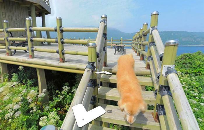 Пёс следовал за фотографом Google карт и попал в каждый кадр животные, карты, навигация, природа, путешествия, собака, фото, южная корея