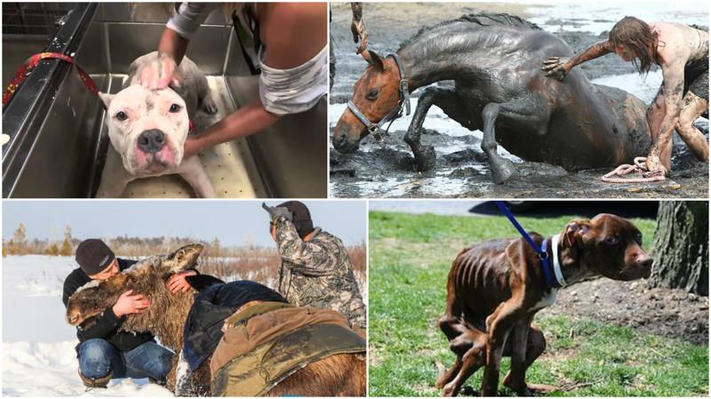 Необычайные и трогательные истории спасения животных! видео, животные, истории, помощь, спасение