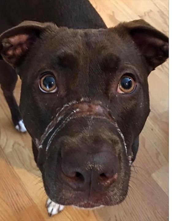 Американца приговорили к пяти годам тюрьмы за жестокое обращение с собакой история, собака, тюрьма