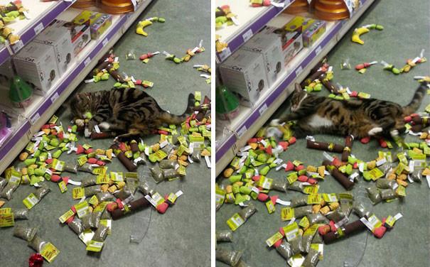 Мятный наркоман со стажем животные, забавно, изменение сознания, кошачья мята, кошки, растения, смешно, фото