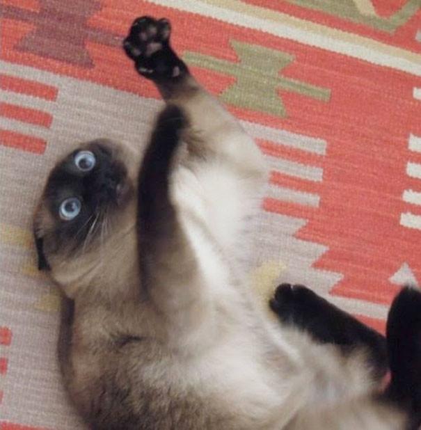 Хозяин, дй еще! животные, забавно, изменение сознания, кошачья мята, кошки, растения, смешно, фото