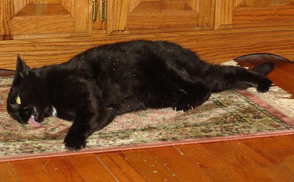 Ну коврик, милый, ну еще пару крошечек! животные, забавно, изменение сознания, кошачья мята, кошки, растения, смешно, фото