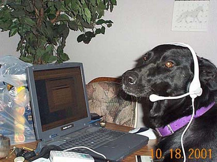 А ваш питомец сидит в интернете?  животные, интернет, котики, собаки