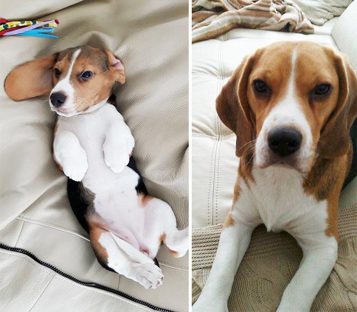 """""""Для меня она всегда будет щенком"""" до и после, животные, любимцы, мило, питомцы, собаки, трогательно, фото"""